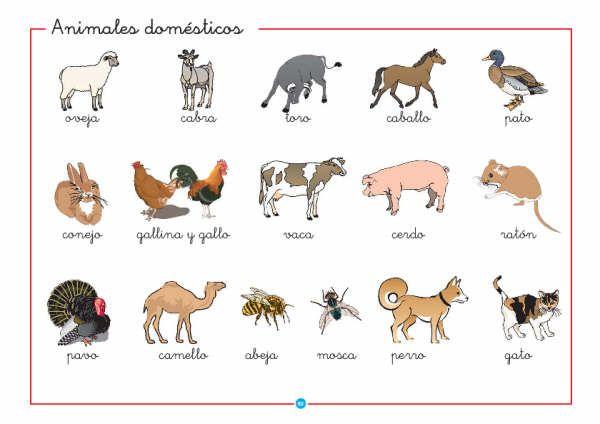 Nombre de 10 animales salvajes en inglés - Imagui
